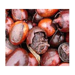 Sviestmedžių aliejus (Shea Butter) 50g